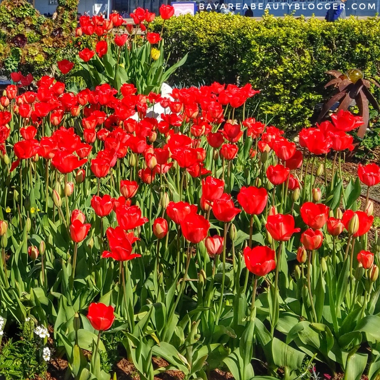 Red Tulips at Tulipmania at Pier 39