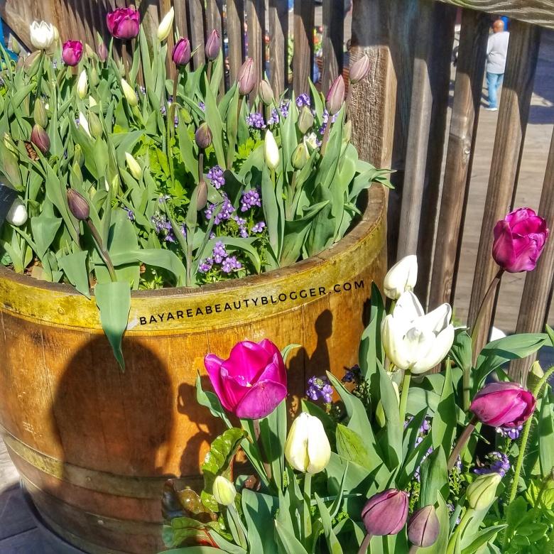 Purple Flowers at Tulipmania 2017