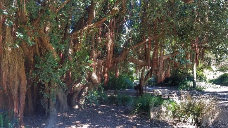 Visiting the San Francisco Botanical Garden