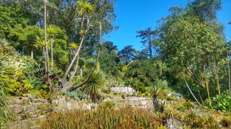 The Succulent Garden at the SF Botanical Garden